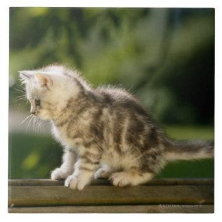 Gatito que se sienta encima del banco, vista later tejas  ceramicas