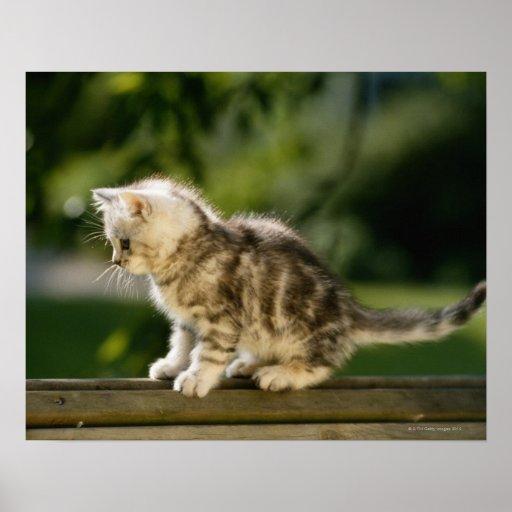 Gatito que se sienta encima del banco, vista later impresiones