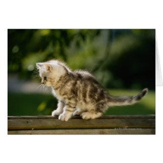 Gatito que se sienta encima del banco, vista later felicitacion