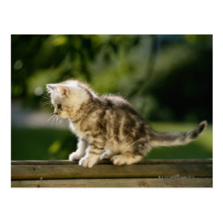 Gatito que se sienta encima del banco, vista tarjeta postal