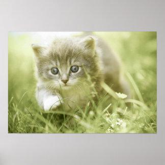 Gatito que toma medidas en la hierba póster