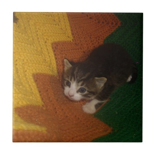 Gatito querido azulejo cerámica