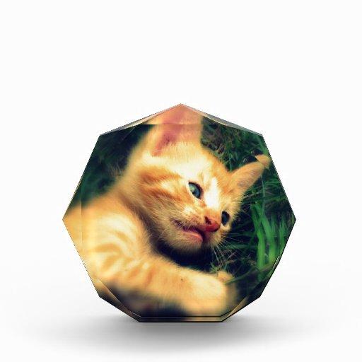 Gatito rayado amarillo adorable