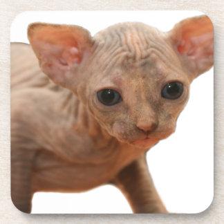 Gatito recién nacido lindo del sphynx posavasos