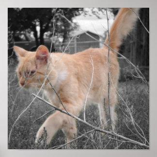 Gatito Romeo en los campos… Póster