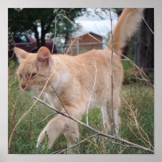 Gatito Romeo en nuestros campos… Póster