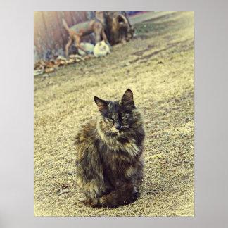 Gatito salvaje con sus dos gatitos en fondo poster