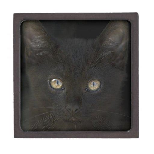 Gatito salvaje del negro azabache con los ojos de  caja de recuerdo de calidad