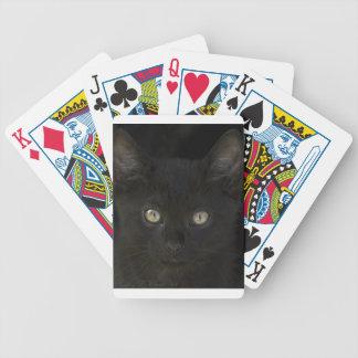 Gatito salvaje del negro azabache con los ojos de  barajas