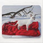 Gatito siamés en la nieve - gato del punto de la alfombrilla de raton