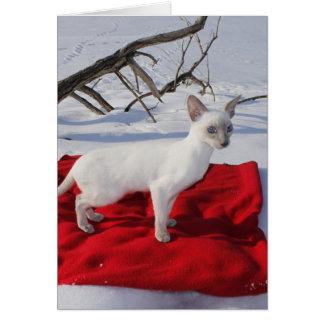 Gatito siamés en la nieve - gato del punto de la felicitaciones