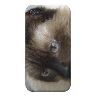 Gatito siamés para 4 iPhone 4 carcasas