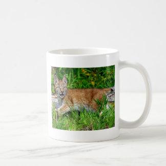 Gatito siberiano del lince tazas de café