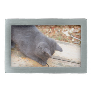 Gatito sin hogar que juega con un palillo hebilla cinturon rectangular