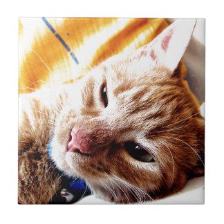 Gatito soñoliento azulejo cuadrado pequeño