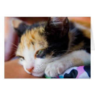 Gatito soñoliento del calicó tarjeta