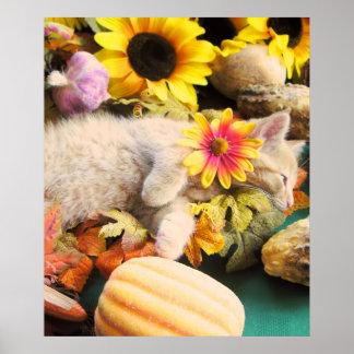 Gatito soñoliento del gato del gatito, cosecha del poster