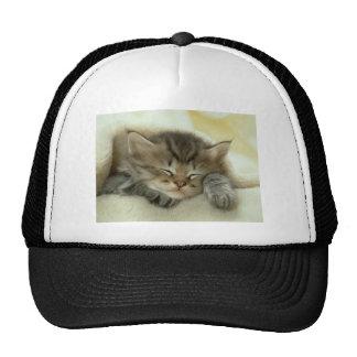 Gatito soñoliento del tiempo de la siesta gorra