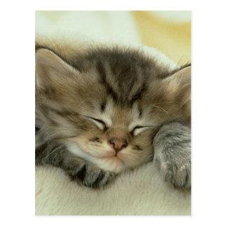 Gatito soñoliento del tiempo de la siesta tarjetas postales