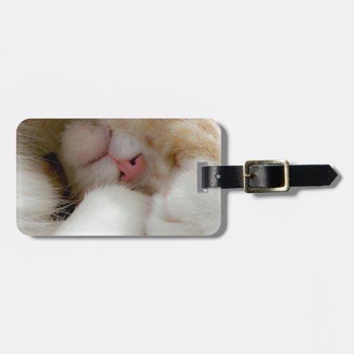 Gatito soñoliento etiquetas bolsas