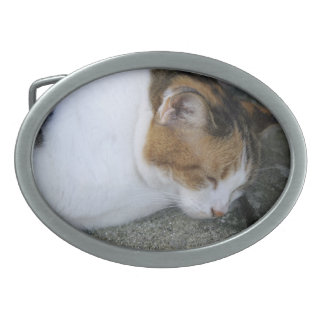 Gatito soñoliento hebilla de cinturon