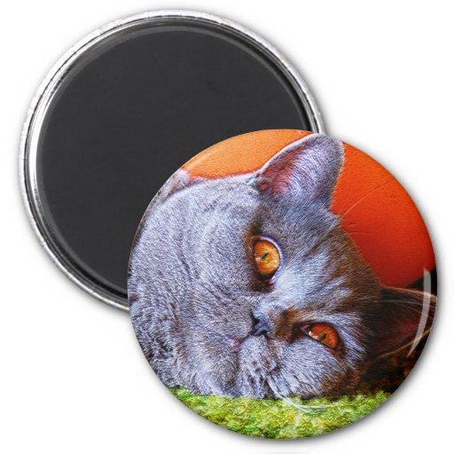 Gatito soñoliento imán para frigorifico
