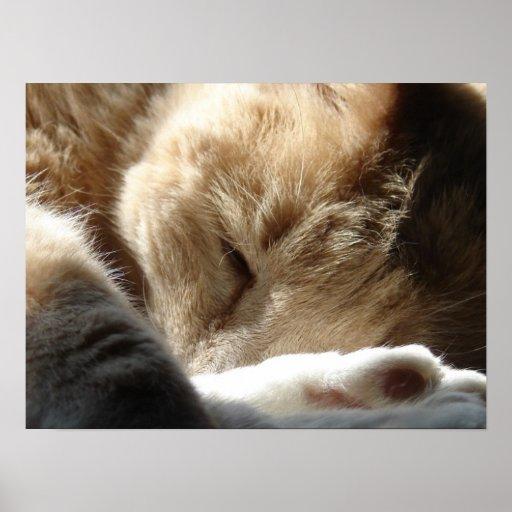 Gatito soñoliento impresiones