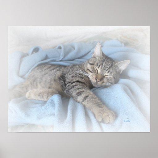 Gatito soñoliento (pequeño poster)