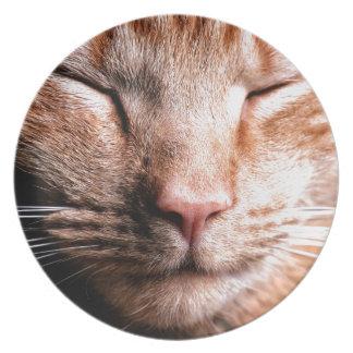 Gatito soñoliento plato