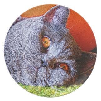 Gatito soñoliento plato para fiesta