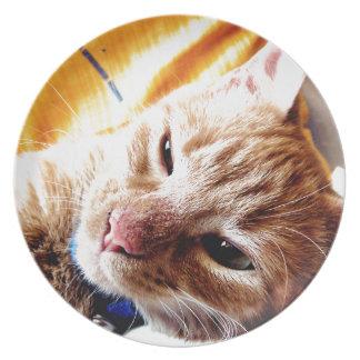 Gatito soñoliento platos de comidas