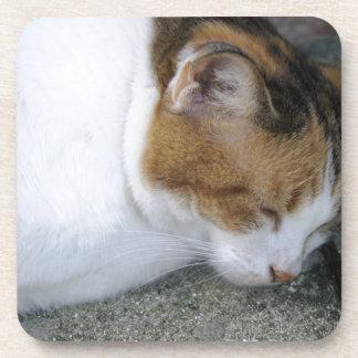 Gatito soñoliento posavasos de bebidas