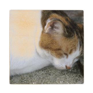 Gatito soñoliento posavasos de madera