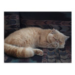 Gatito soñoliento tarjeta postal