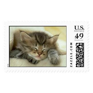 Gatito soñoliento timbre postal