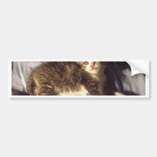Gatito sorprendido pegatina de parachoque