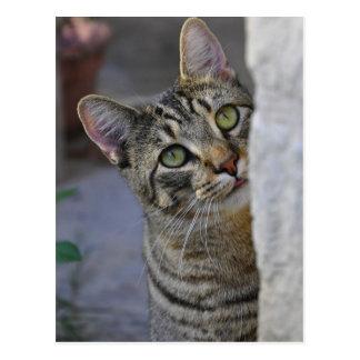 Gatito triste gato de Bengala Tarjetas Postales