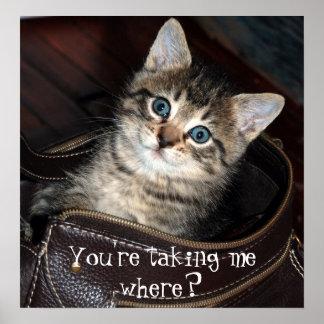 ¿Gatito usted me está tomando donde? Poster