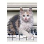 Gatito y el piano postales