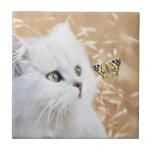 Gatito y mariposa blancos azulejos ceramicos