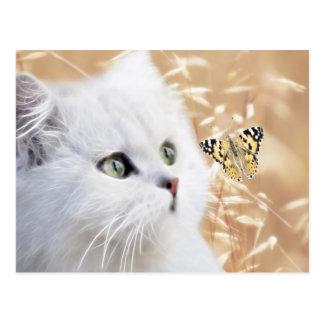 Gatito y mariposa blancos tarjetas postales
