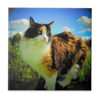 Gatito y nubes del calicó azulejo cuadrado pequeño