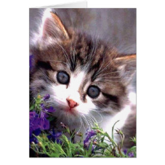 Gatito y violetas tarjeta de felicitación