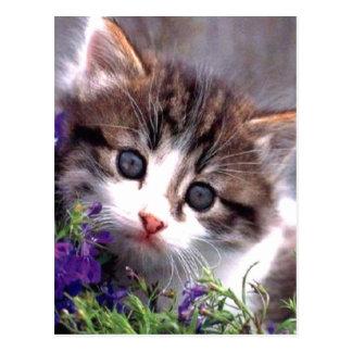 Gatito y violetas tarjetas postales