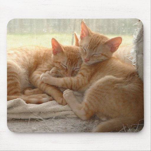 Gatitos anaranjados alfombrillas de raton