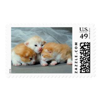 Gatitos anaranjados de la piel sellos postales