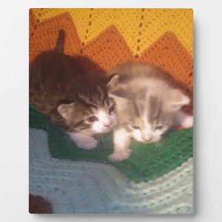 Gatitos borrosos placa de plastico