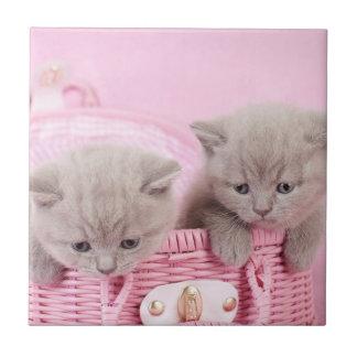 Gatitos británicos del shorthair azulejo cuadrado pequeño