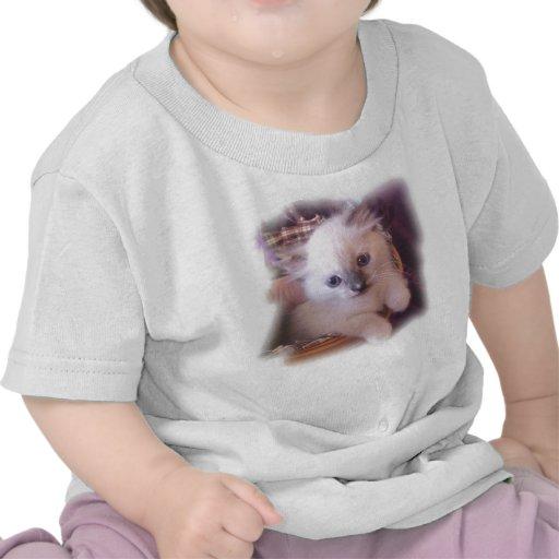 gatitos camiseta