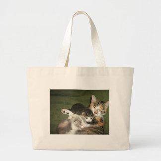 Gatitos con la mamá bolsa